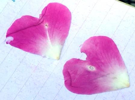 nature 23 flower heart petals